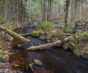 Гладышевский заказник на Карельском перешейке — территория живой природы без антропогенного влияния