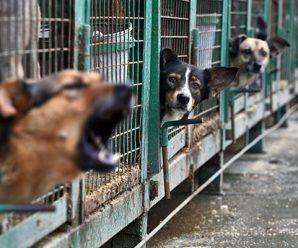 В питерском приюте живут животные без документов