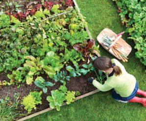 Роспотребнадзор проверил выставку садоводства